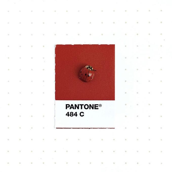 pantone projeto 1