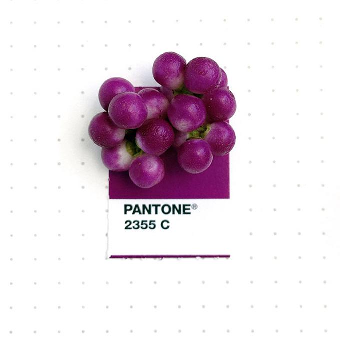 pantone projeto 3