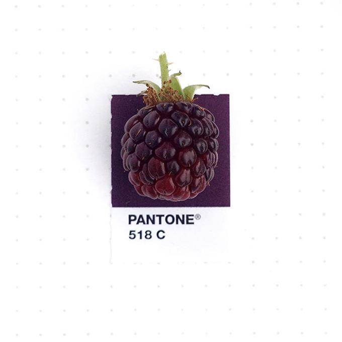 pantone projeto 9